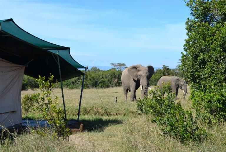 DSC 0140 Rift Valley Adventures Ol Pejeta Wildlife Camp, Kenya