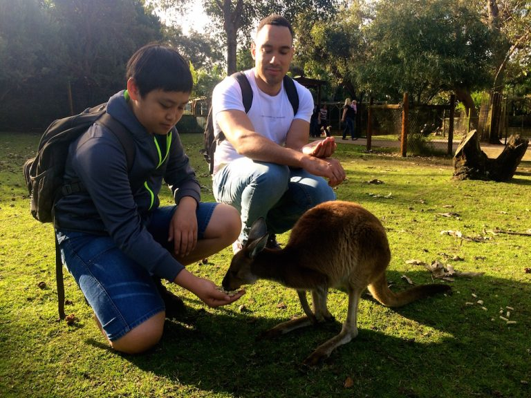 Feeding Kangaroo Rift Valley Adventures Australia