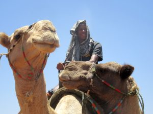 Of Fig Trees and Camels