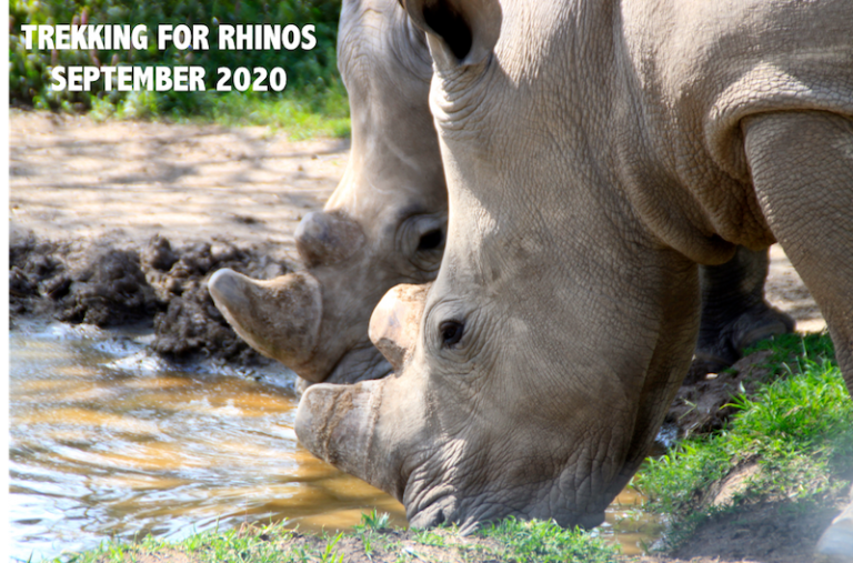 Helping Rhinos: Mount Kenya Charity Challenge