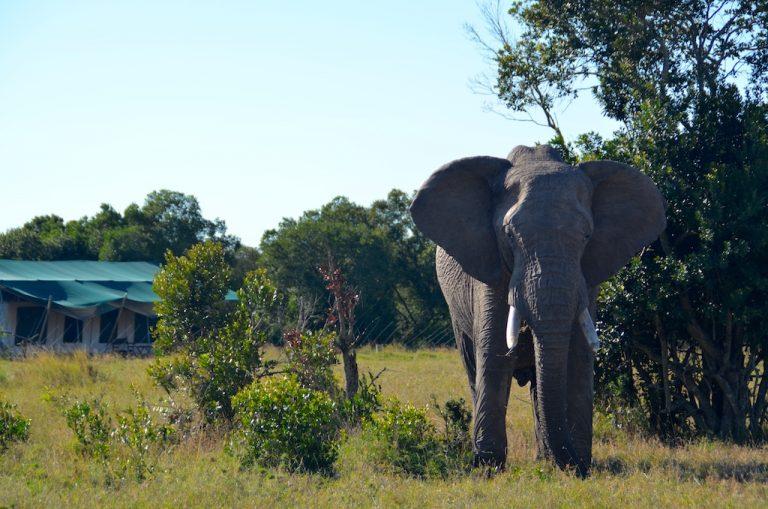 Behind the camp at Ol Pejeta – meet Mwaura